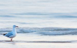 6989626-beach-waves-sea-bird-seagull